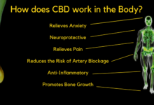Photo of How CBD Works With The Body