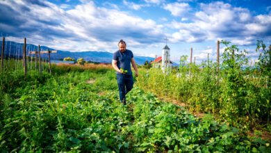 Photo of What We Can Learn From Okanagan Cultivators Marketing Strategy