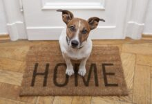 Photo of 4 Tips For Keeping a Clean Home With Pets